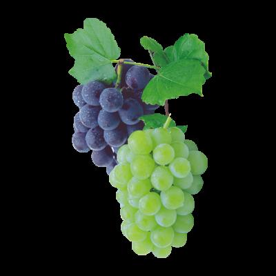 FAVPNG_sultana-kyoho-grape-raceme_k1UFU2sv